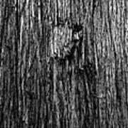 Bark Mark Art Print