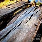 Bark Texture Art Print