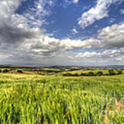 Barley View  Art Print