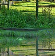Barn And Fence Art Print
