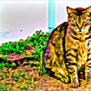 Barn Kitty Art Print