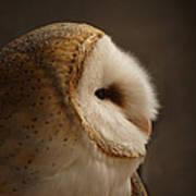 Barn Owl 3 Art Print
