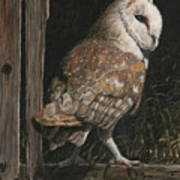 Barn Owl In The Old Barn Art Print