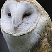 Barn Owl No.1 Art Print