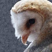 Barn Owl Painterly Art Print