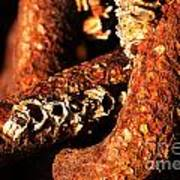 Barnacles And Rust  Art Print