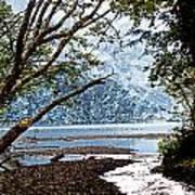 Barnes Creek At Lake Crescent - Washington Art Print
