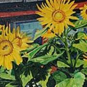 Barnyard Sunflowers Art Print