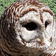 Barred Owl 2 Art Print