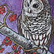 Barred Owl And Berries Art Print