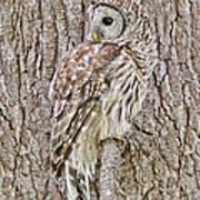 Barred Owl Camouflage Art Print