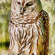 Barred Owl On Moss Art Print