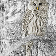 Barred Owl Snowy Day In The Forest Art Print