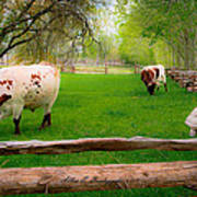 Barrington Farm Bovine Art Print