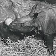 Basel World-record In Rhinoceros Breeding Art Print