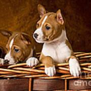 Basenji Puppies Art Print by Marvin Blaine