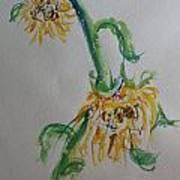 Bashful Sunflower Art Print