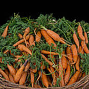 Basket Of Carrots Art Print