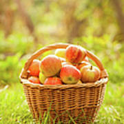 Basket With Apples Art Print