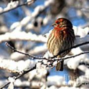 Basking In Winter Light Art Print