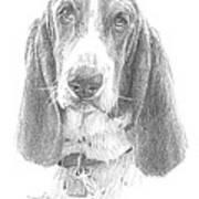 Basset Hound Pencil Portrait Art Print