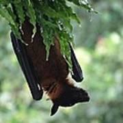 Bat In The Rain Art Print