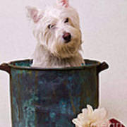 Bath Time Westie Art Print