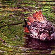 Bathing Red Tailed Hawk Art Print
