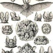 Bats Bats And More Bats Art Print