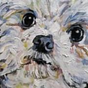 Baxter Art Print
