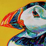 Bay Bulls Puffin Art Print