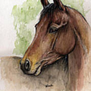 Bay Horse Portrait Watercolor Painting 02 2013 A Art Print