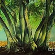 Bay Leaves Tree Art Print