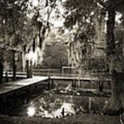 Bayou Evening Art Print
