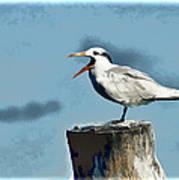 Beach Bird Art Print