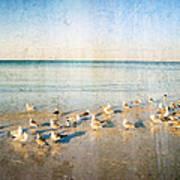 Beach Combers - Seagull Art By Sharon Cummings Art Print by Sharon Cummings