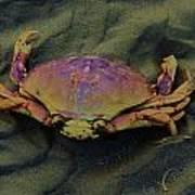 Beach Crab Art Print by Helen Carson