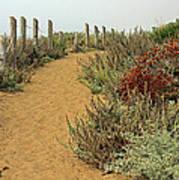 Beach Dune  Art Print