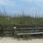 Beach Grass And Bench  Art Print by Cathy Lindsey