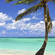 Beach Of A Tropical Island Art Print