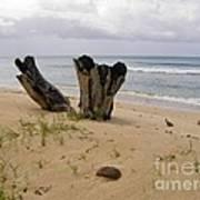 Beach Scenery Art Print