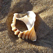Beach Shell Art Print by David Yack