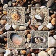 Beach Shells And Rocks Collage Print by Carol Groenen