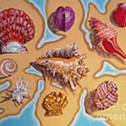 Beach Shells Art Print
