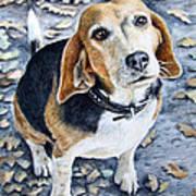 Beagle In Autumn Art Print