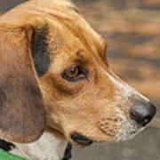 Beagle Loyalty Art Print