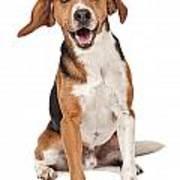 Beagle Mix Dog Isolated On White Art Print