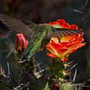 Beak Deep In Nectar  Art Print