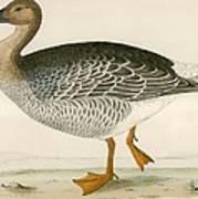 Bean Goose Art Print