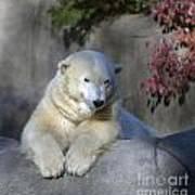 Bear 3789 Art Print